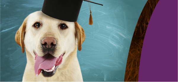 How to Get Good Grades in Pet Care