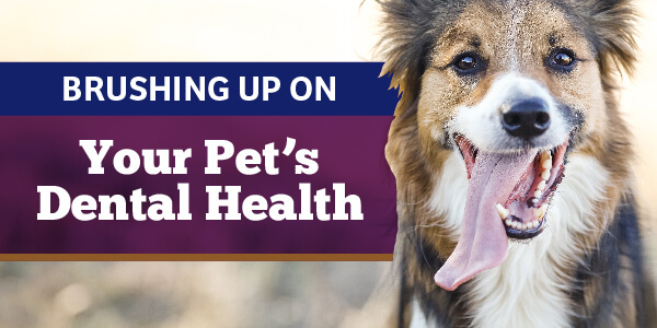 Your Pet's Dental Health