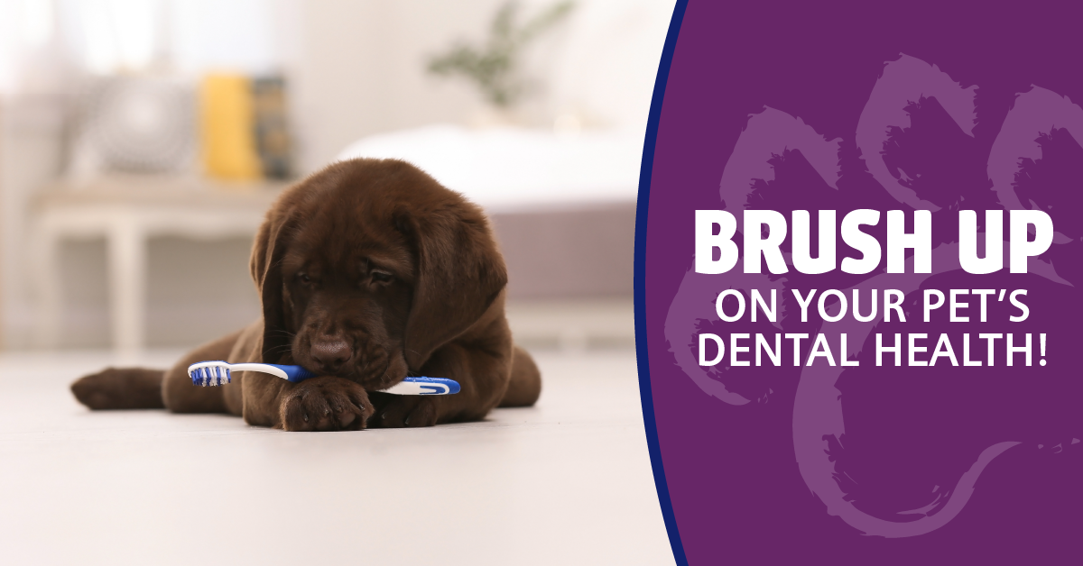 Brush Up On Your Pet's Dental Health!
